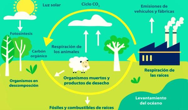 Figura 2. Ciclo del carbono. Imagen obtenida del sitiohttps://www.explicacion.net.